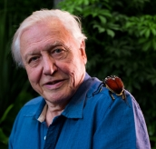 Micro Monsters with David Attenborough: Predator